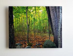 Sacred Grove Aluminum Print